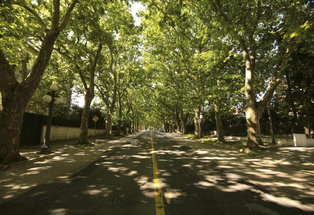 Avenida 19 de Abril, foto por Celeste Carnevale