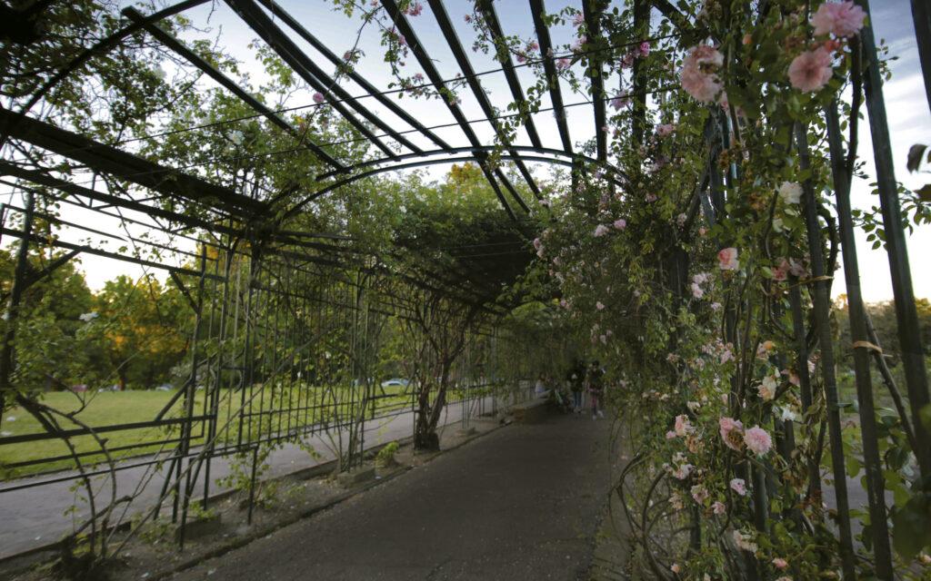 La rosaleda del Prado, popularmente llamada El Rosedal, foto por Celeste Carnevale